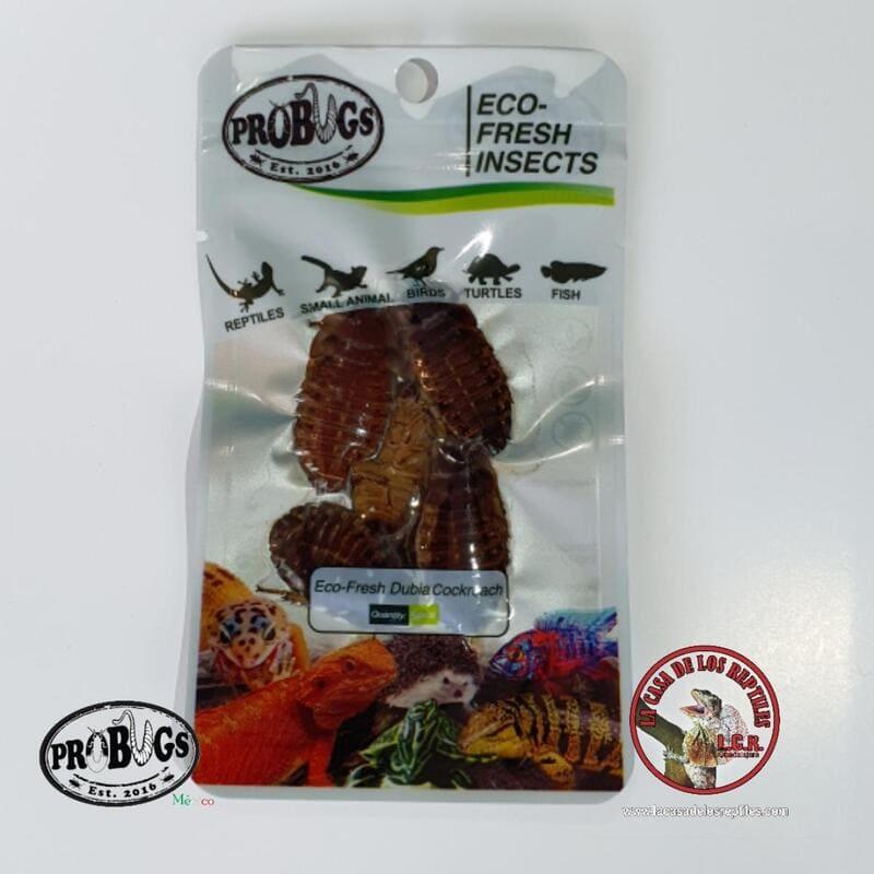Dubia - cucaracha dubia
