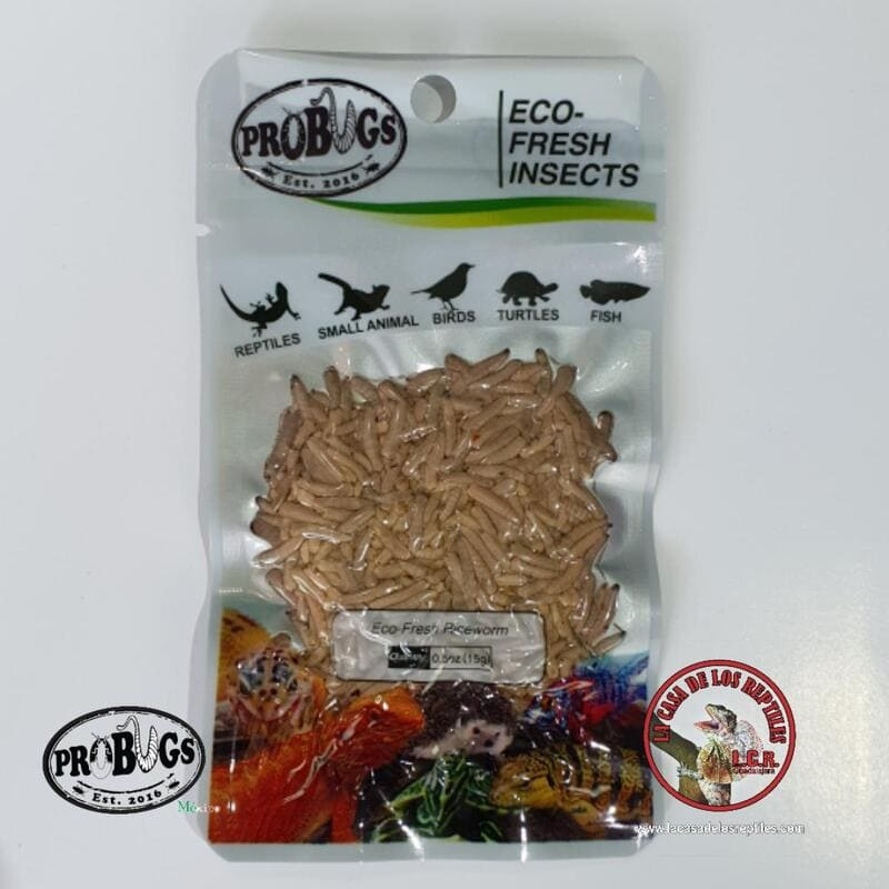 Riceworm - gusano de arroz